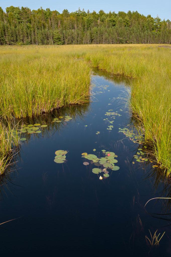 Beaver Pond Trail, Algonquin Park