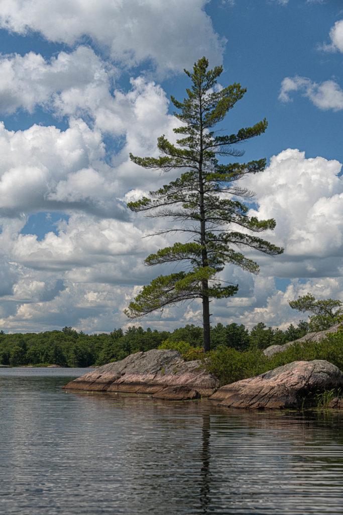 Solitary Pine on Crab Lake - KHPP