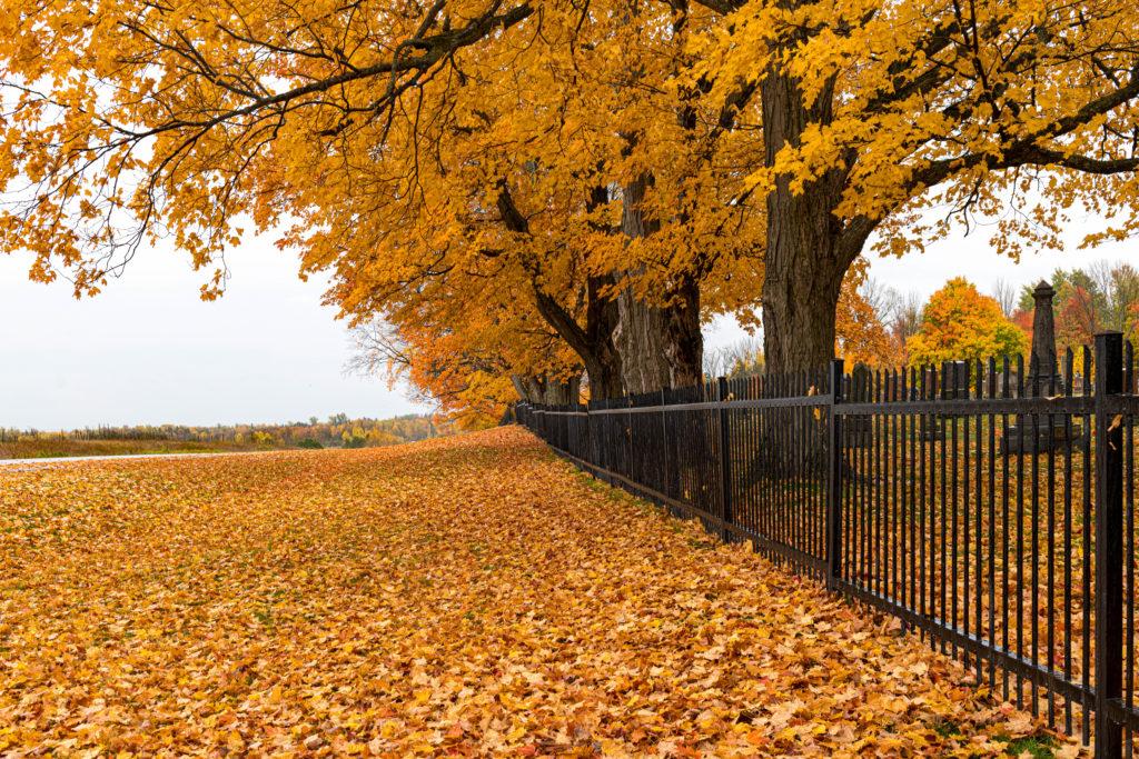Lakefield Cemetery on the Buckhorn Road, Selwyn Township